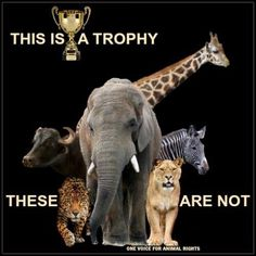 Learn about culling and stop whining about the deaths of these animals. They are not the gentle plushies you remember from your childhood. Animals And Pets, Cute Animals, Wild Animals, Animal Cruelty, Animal Welfare, Save The Planet, Animal Rights, Beautiful Creatures, Animal Kingdom