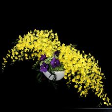 しあわせの黄色い翼 Ikebana Interesting use of the Colors