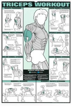 The Absolute Beginner's Guide to Exercise is part of Workout posters - Post with 10757 votes and 240403 views Tagged with The More You Know, ; Shared by The Absolute Beginner's Guide to Exercise Gym Workout Chart, Gym Workout Tips, Weight Training Workouts, Dumbbell Workout, Fun Workouts, Back Workouts For Men, Tricep Workout Women, Tri Workout, Aerobic Exercises