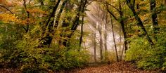 Bósnia E Herzegovina, Mystical Forest, Shades Of Yellow, Landscape Architecture, Free Photos, Photo Editing, Photoshop, Leaves, Green Nature