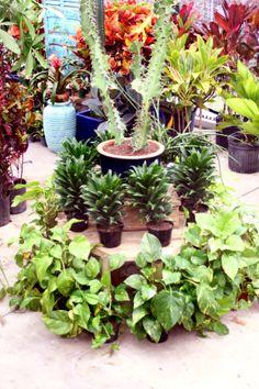 Green House Plants enjoying being warm ;)