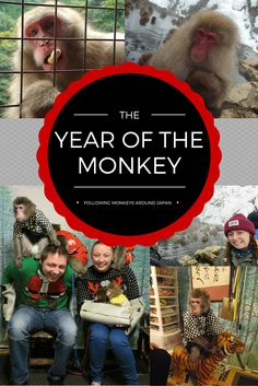 Monkeys are all  over Japan, so I decided to seek them out wherever I could - it is the Year of the Monkey here after all! Kyoto, Nagano and Tokyo!