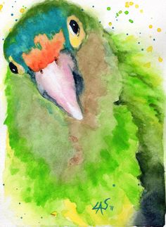 half moon conure watercolor by Linda Scott
