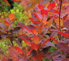 1000+ images about Delph Ridge Arboretum on Pinterest ...