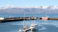 AFAR.com Highlight: Whale Watching in Northern Iceland by swati verma