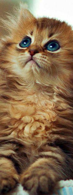 Olhai para o alto...de lá vem teu socorro.... and like OMG! get some yourself some pawtastic adorable cat apparel