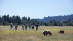 Wildlife Camera Pack Alaskan Brown Bear, Best Camera, Camera Lens, Safari, Wildlife, Packing, Animals, Bag Packaging, Animales