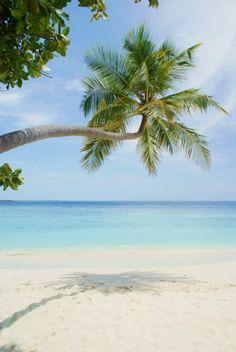 Photo of Biyadhoo Island Resort
