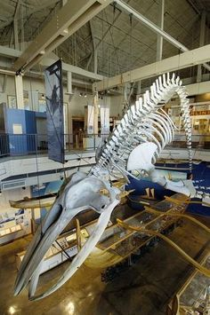 Oahu Photos at Frommer's - This humpback whale skeleton hangs over the exhibits at the Hawaii Maritime Center.