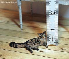 ~*~ OOAK ~*~ 1:12 Maine Coon Dollhouse Miniature Kitten Cat ~*~ Handmade ~*~