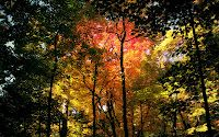Nature Forest Wallpaper Wallpapers) – Wallpapers and Backgrounds Active Wallpaper, 4k Wallpaper For Mobile, Widescreen Wallpaper, Desktop Wallpapers, Autumn Wallpaper Hd, Forest Wallpaper, Nature Wallpaper, Beautiful Wallpaper, Autumn Nature