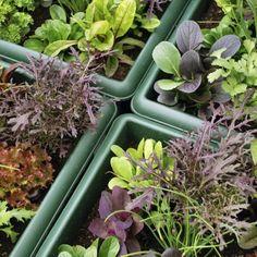 In de moestuin kunnen planten elkaar gunstig beinvloeden maar ook ongunstig, dit noem je combinatieteelt. Wij leggen je uit hoe het werkt.