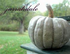 Jarrahdale  pumpkin silver blue