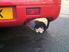 Kediler nereye girmez ki