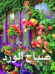 صباح الورد من عاشقة الورد;)