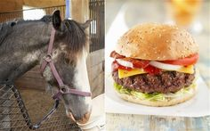 Horse meat has been found in burgers on sale in British supermarkets. Tests on beef products sold in Tesco, Lidl, Aldi, Iceland and Dunnes Stores uncovered low levels of the animal's DNA.
