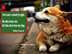 A'm caro i cared fy nghi.  He who loves me let him love my dog. Old welsh Proverb #Wales #Welsh #Corgi