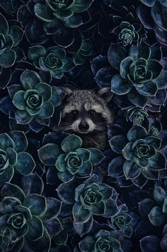 Raccoon - Hide & Seek