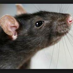 Evie wants a mouse