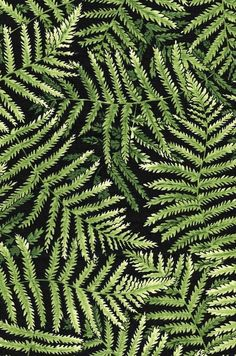 NZ green Ferns on black background. Craft Shop, Craft Stores, Parakeet Colors, Raven Color, Peacock Colors, Crazy Colour, Sewing Stores, Ferns, New Zealand