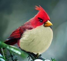 Les oiseaux Angry Birds plus vrais que nature !