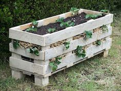 Best way to grow strawberries! See the many ways of growing strawberries in containers, strawberry planters and grow strawberries in pots Diy Pallet Projects, Pallet Ideas, Garden Projects, Woodworking Projects, Pallet Designs, Pallet Crafts, Craft Projects, Diy Crafts, Strawberry Planters