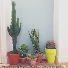 Accumulation de plantes grasses et cactus / La décoration des internautes #Semaine 42 - 100 Idées Déco
