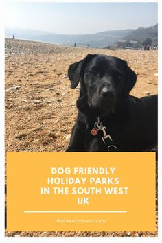 If you're looking for dog friendly holiday parks in the South West UK then check out some of these great places to enjoy a holiday with your dog. Holiday Park, Holiday Resort, Beach Holiday, Adventure Golf, Dog Friendly Holidays, Uk Beaches, Jurassic Coast, Countries To Visit, Nature Reserve