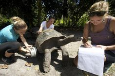 "Um excuse me, what are you writing about me?"" - vols Amanda, Emma & Anna work up a tortoise for the 2016 census. Volunteer Work, Volunteer Abroad, Personal And Professional Development, Wildlife Conservation, Seychelles, Tortoise, United Kingdom, Amanda, National Parks"