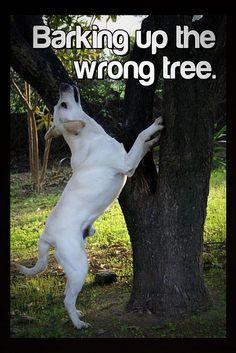 Barking up the wrong tree.    www.doggiediggsdaycare.com/