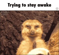 Trying to stay awake / iFunny :)