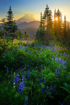 The sun is setting behind Mount Rainier from Naches Peak loop trail. Photo by Inge Johnson.
