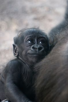SQUEEEE! -- Alika and the family group have been enjoying some outside time lately! Visit www.scz.org to see when they will be on exhibit!