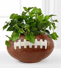 Football Fields Ivy Plant  The Football Fields Ivy Plant is a fun and fresh way to celebrate with your favorite football fan! A lush and lovely ivy plant displays vibrant green foliage planted perfectly in a designer ceramic football inspired container. It's the perfect way to celebrate Father's Day, a birthday, or to celebrate the upcoming football season. Plant measures 4.5-inches in diameter.