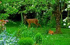 Hallo Freunde,  ... sagte das Reh gestern in meinem Garten, nachdem hier Vögel, Eichhörnchen, Igel, Fasane und ein Fuchs rumrennen, sag ich auch mal wieder guten Tag. :-)