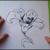 Como dibujar flores paso a paso  How to draw flowers  Drawing