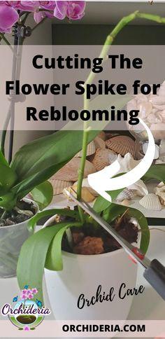 Indoor Orchids, Orchids Garden, Garden Plants, Indoor Plants, Orchid Roots, Orchid Leaves, Orchid Flowers, Orchid Plant Care, Orchid Plants