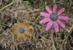 Patinated sterling silver Rudbeckia and Echinacea flowers handcrafted by Danniella Jayne Wilde