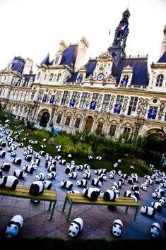 Социальная акция WWF