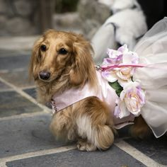 Celebrate Your Vow Renewal With Your Dog Too! #vowrenewal #dogs