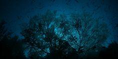 Rajaampat reef