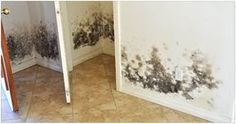 How to Combat Mold in a Flooded House Before you rebuild or restore your water-damaged home, take these steps to keep mold at bay by Gold Coast Flood Restorations Diy Mold Remover, Mold Removal, Home Renovation, Flood Restoration, Flooded House, Get Rid Of Mold, Remove Mold, Berber Carpet, Carpet Stairs