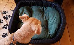Lina hat ein neues Bett bekommen. Na ja,vielleicht mehr Ruheplatz, denn ihr eigentliches Bett steht im Schlafzimmer neben unserem. Das wollen wir ihr auch gar nicht wegnehmen, denn daran hängt sie…
