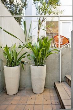 Tall planters.