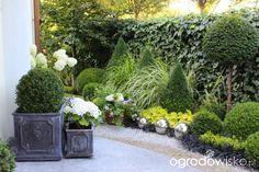 Metamorfozy ogrodowe - Forum ogrodnicze - Ogrodowisko