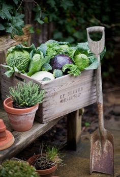 And a couple of cabbages.