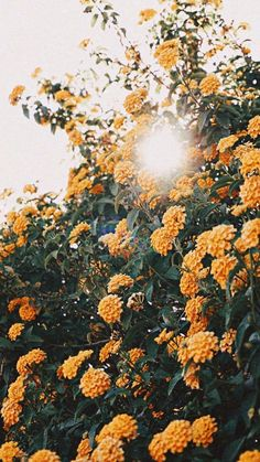 Iphone wallpaper Gorgeous Floral iPhone Wallpaper Collection The post Gorgeous Floral iPhone Wallpaper Collection appeared first on erkens. Aesthetic Backgrounds, Aesthetic Iphone Wallpaper, Aesthetic Wallpapers, Frühling Wallpaper, Flower Phone Wallpaper, Iphone Wallpaper Yellow, Wallpaper Quotes, Phone Backgrounds, Wallpaper Backgrounds