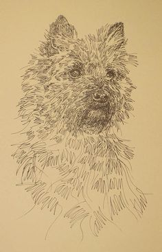 Cairn Terrier Artist Kline draws his dog art using by drawDOGS
