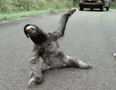 Funny pictures about Drop the bass: sloth edition. Oh, and cool pics about Drop the bass: sloth edition. Also, Drop the bass: sloth edition. Funny Moving Pictures, Funny Photos, Funny Images, Funny Dogs, Funny Animals, Cute Animals, Funny Sloth, Sloth Memes, Funny Humor