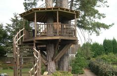 Room With A View Tree House | Blue Forest